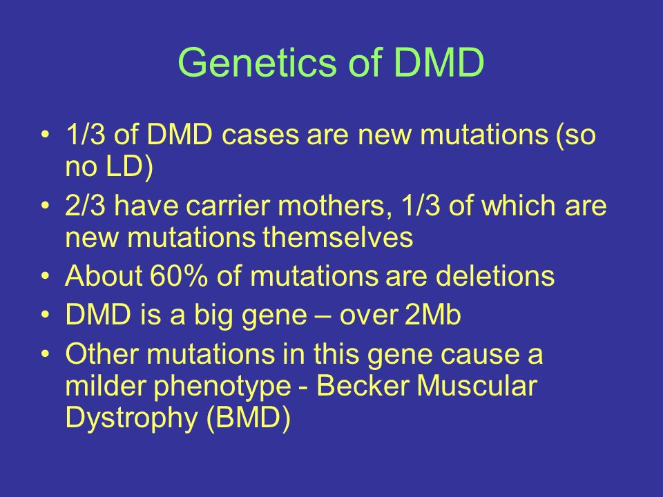 Genetics of DMD 1/3 of DMD cases are new mutations (so no LD)