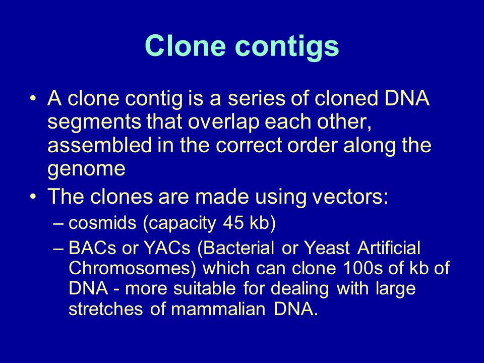 Clone contigs A clone contig is a series of cloned DNA segments that overlap each other, assembled in the correct order along the genome.