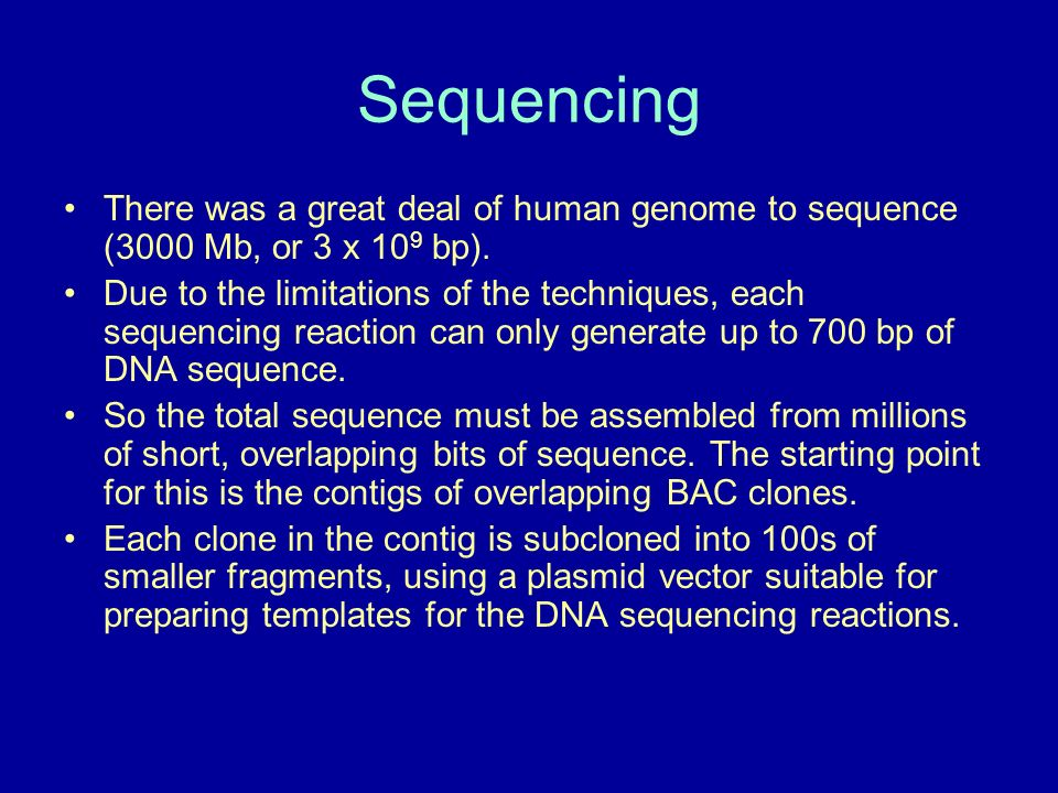 Sequencing There was a great deal of human genome to sequence (3000 Mb, or 3 x 109 bp).