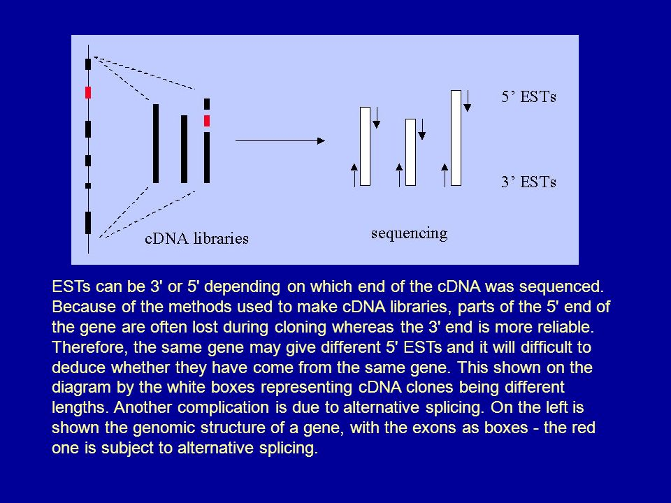 ESTs can be 3 or 5 depending on which end of the cDNA was sequenced