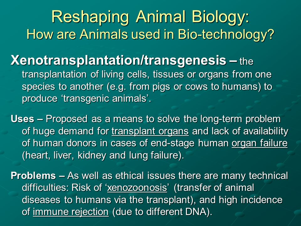 Reshaping Animal Biology: How are Animals used in Bio-technology