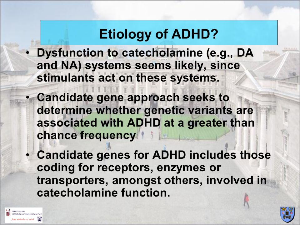 Etiology of ADHD Dysfunction to catecholamine (e.g., DA and NA) systems seems likely, since stimulants act on these systems.