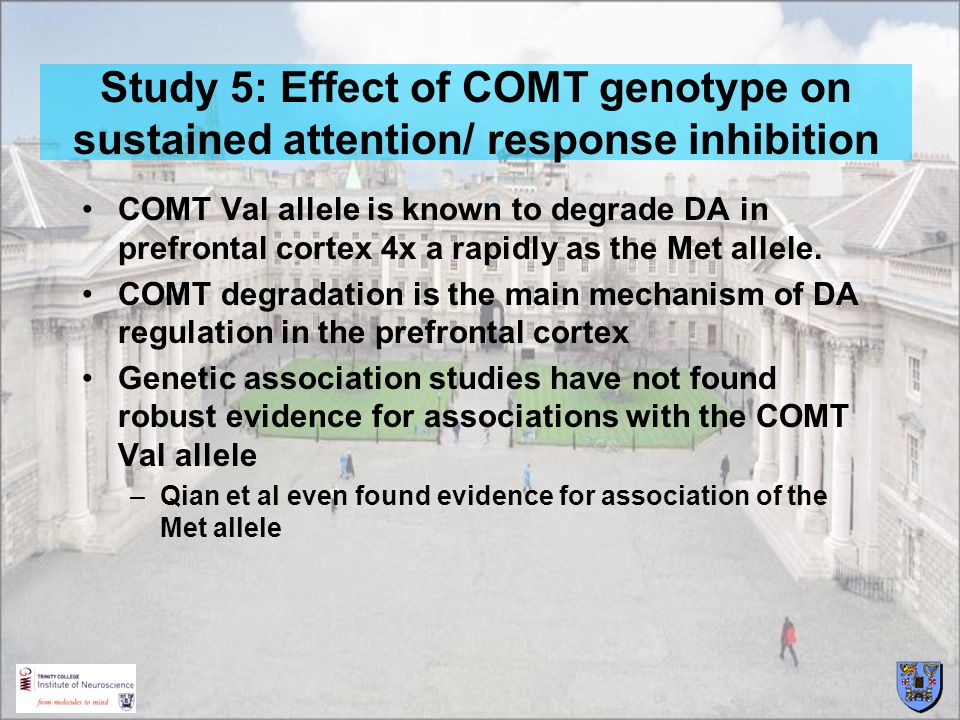 Study 5: Effect of COMT genotype on sustained attention/ response inhibition