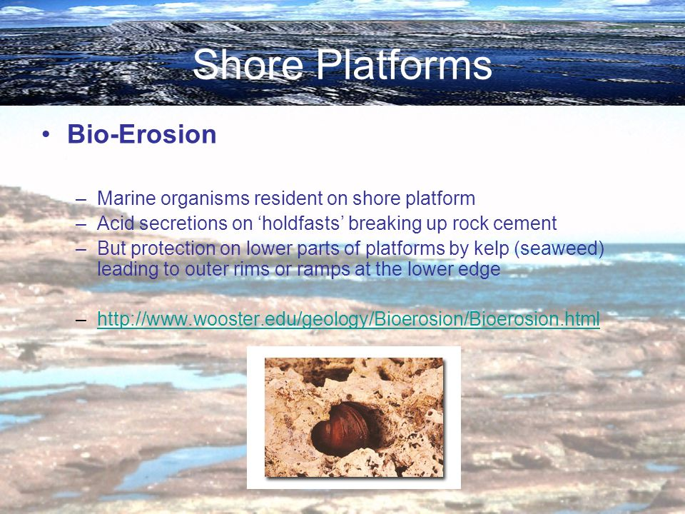 Shore Platforms Bio-Erosion