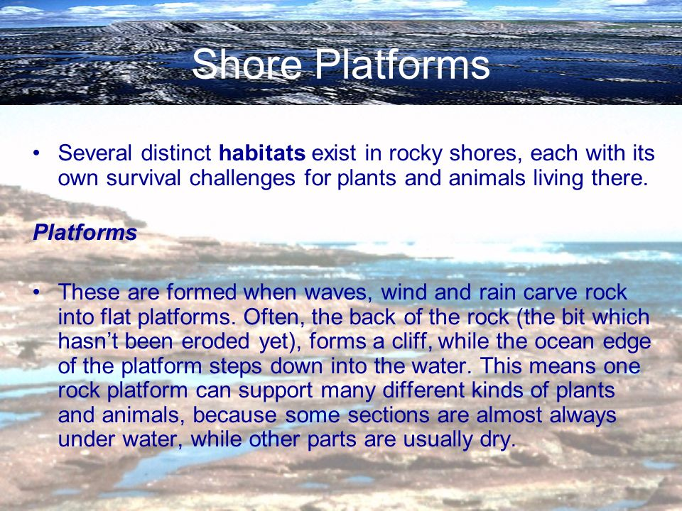 Shore Platforms Several distinct habitats exist in rocky shores, each with its own survival challenges for plants and animals living there.