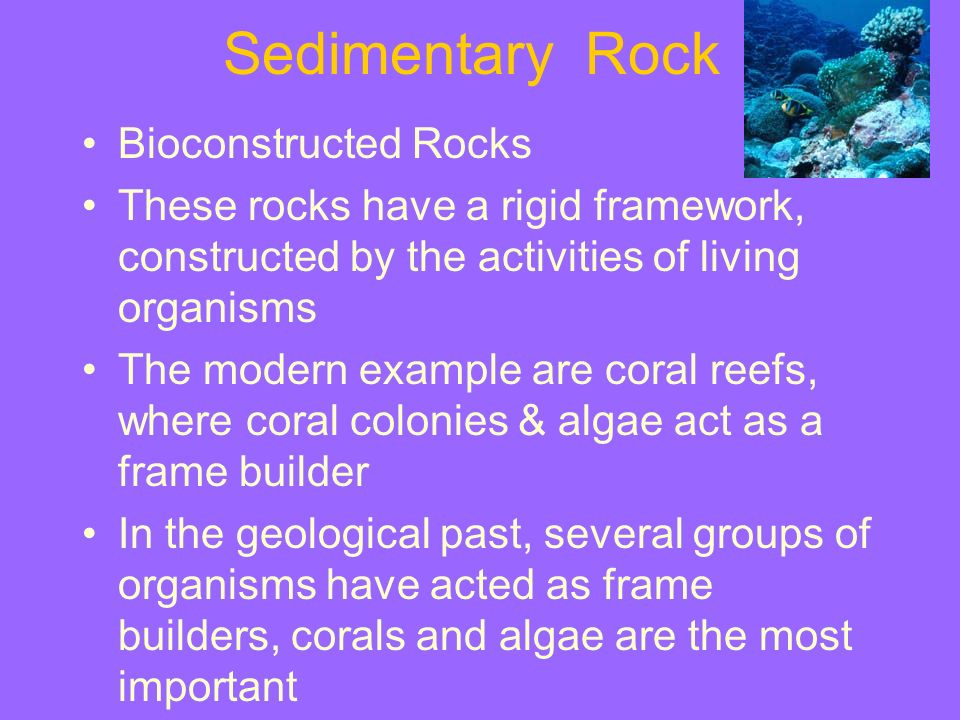 Sedimentary Rock Bioconstructed Rocks