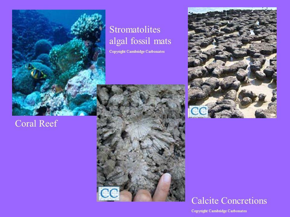 Stromatolites algal fossil mats