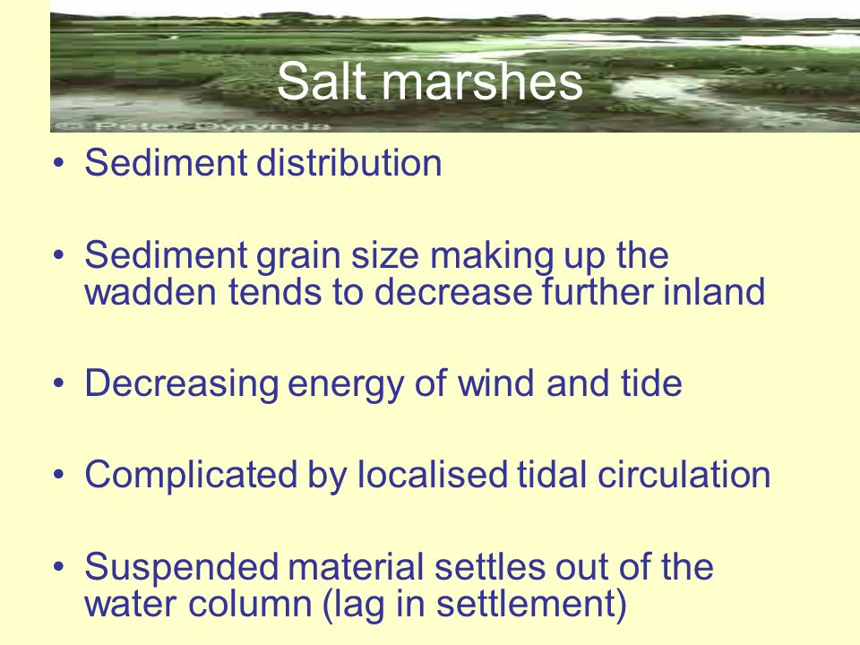 Salt marshes Sediment distribution
