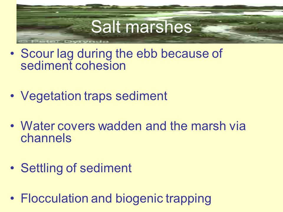 Salt marshes Scour lag during the ebb because of sediment cohesion