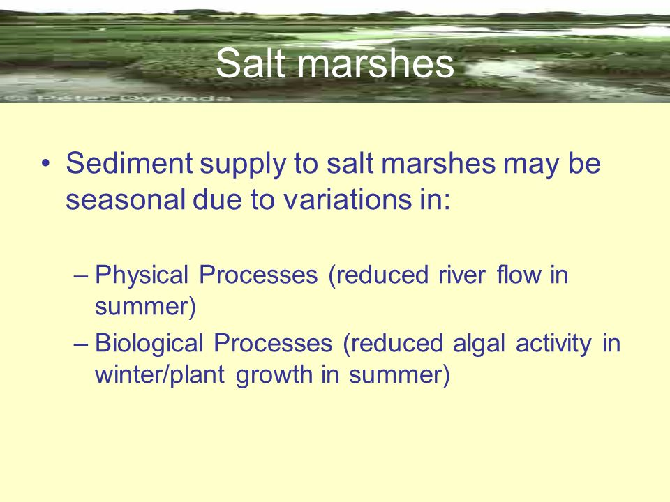 Salt marshes Sediment supply to salt marshes may be seasonal due to variations in: Physical Processes (reduced river flow in summer)