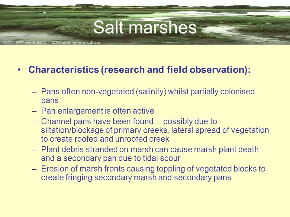Salt marshes Characteristics (research and field observation):