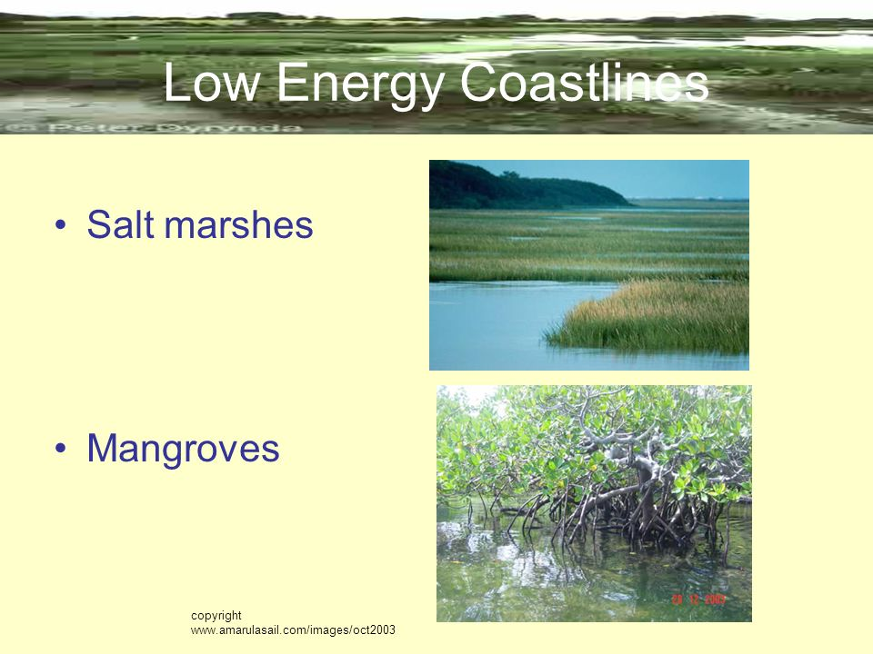 Low Energy Coastlines Salt marshes Mangroves