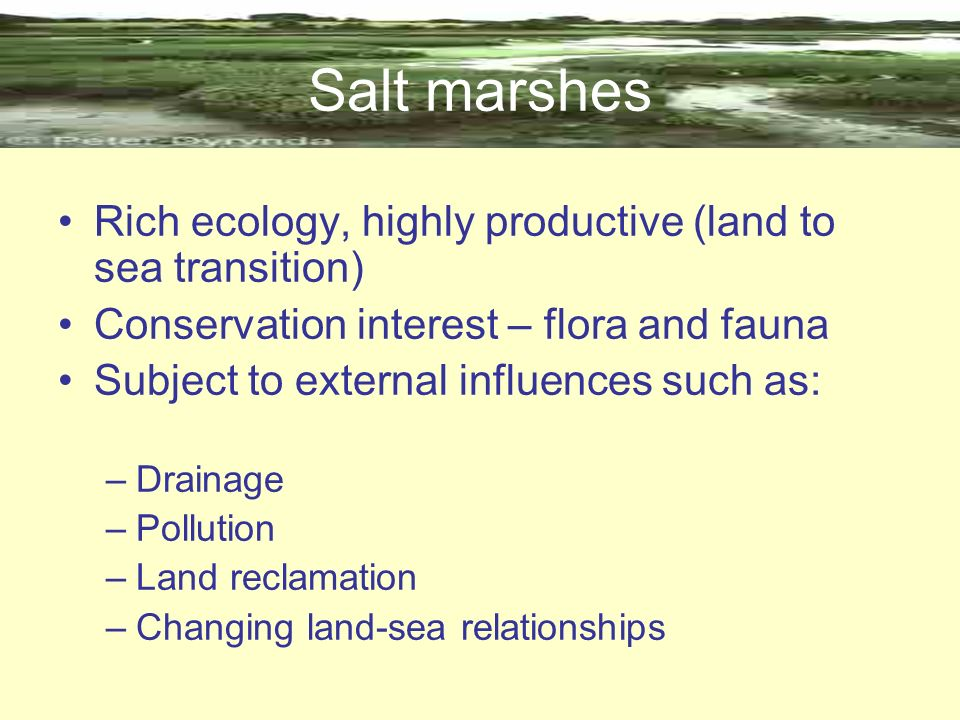 Salt marshes Rich ecology, highly productive (land to sea transition)