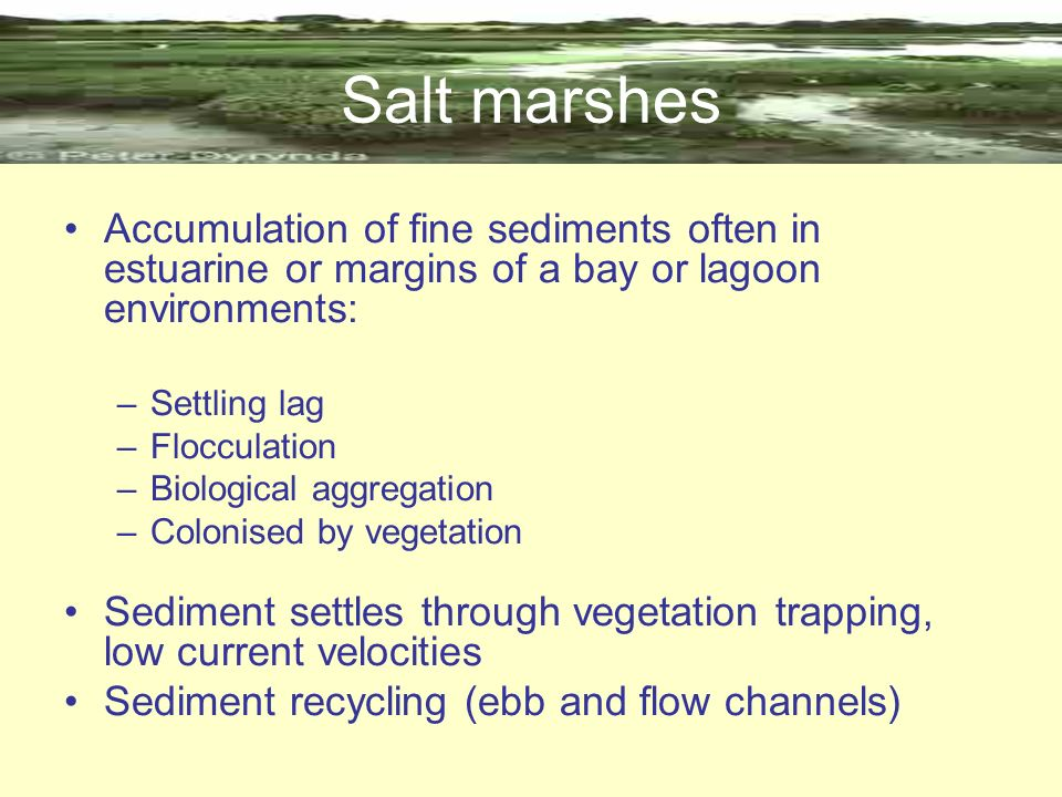 Salt marshes Accumulation of fine sediments often in estuarine or margins of a bay or lagoon environments: