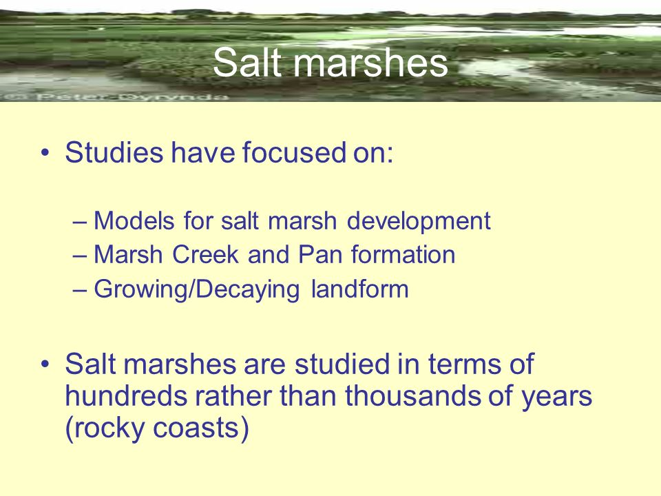 Salt marshes Studies have focused on:
