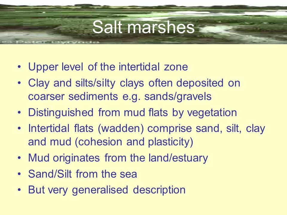 Salt marshes Upper level of the intertidal zone