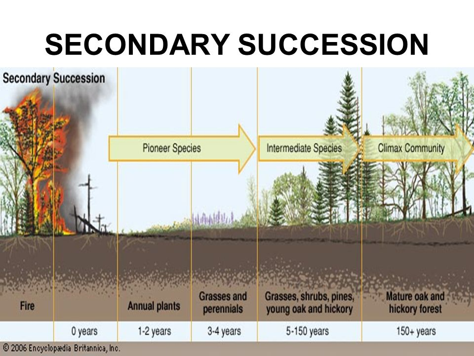 primary and secondary succession Primary and secondary succession ecological succession ecosystems are constantly changing in response to natural and human disturbances as an ecosystem changes, older inhabitants gradually die out and new organisms move in, causing further changes in the community.