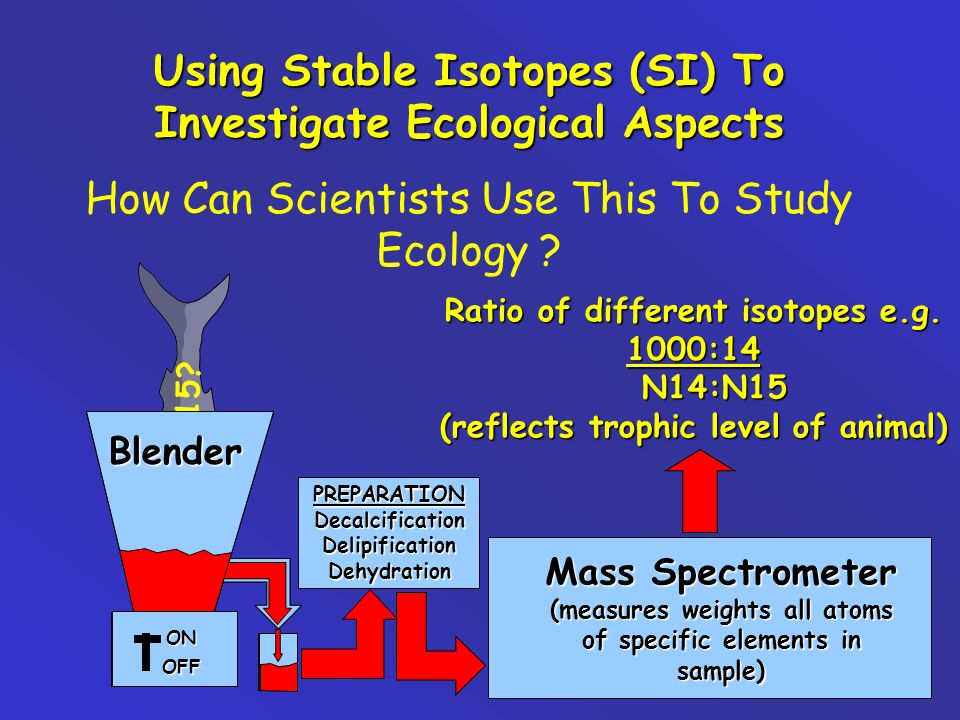 Using Stable Isotopes (SI) To Investigate Ecological Aspects