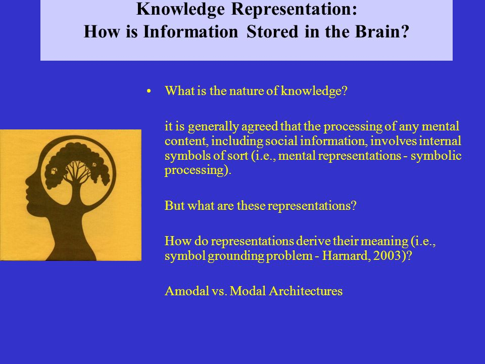 Knowledge Representation: How is Information Stored in the Brain
