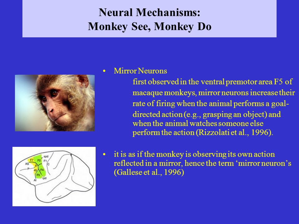 Neural Mechanisms: Monkey See, Monkey Do