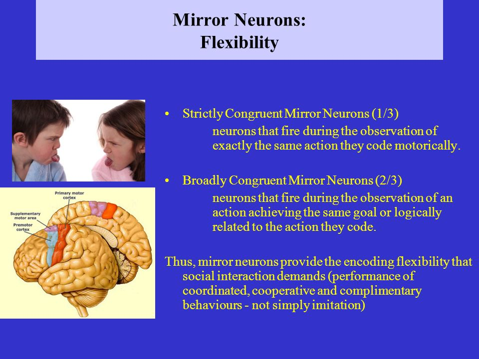 Mirror Neurons: Flexibility