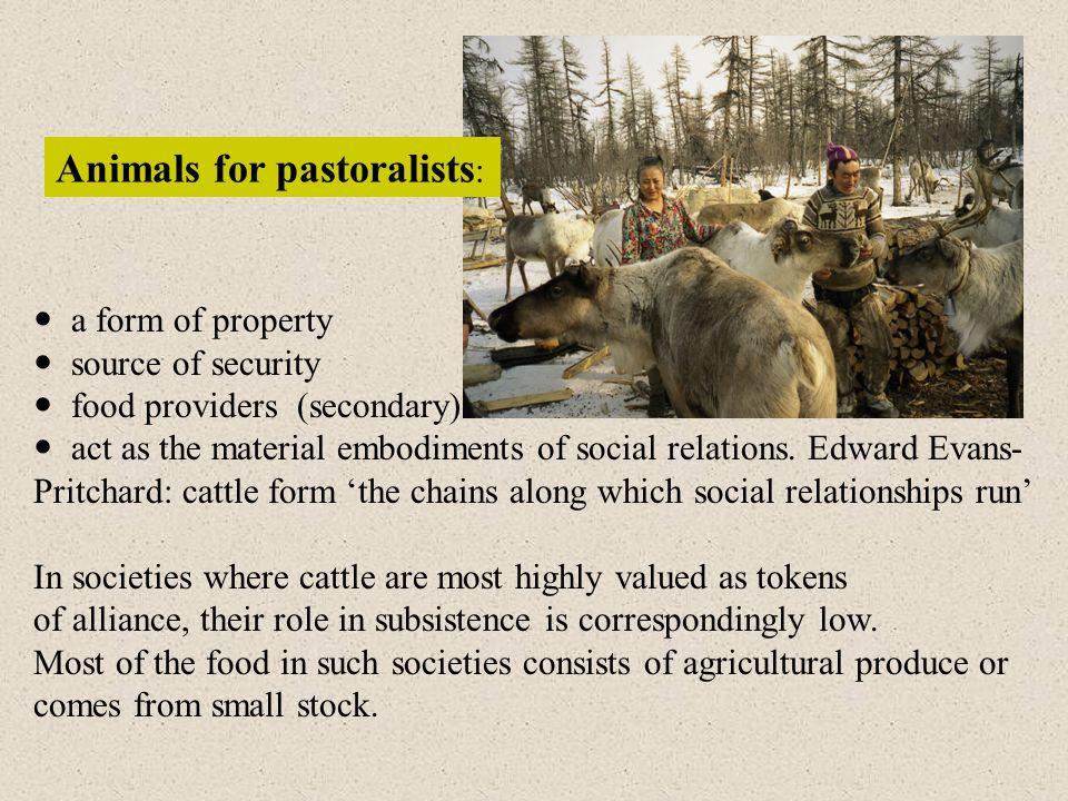 Animals for pastoralists: