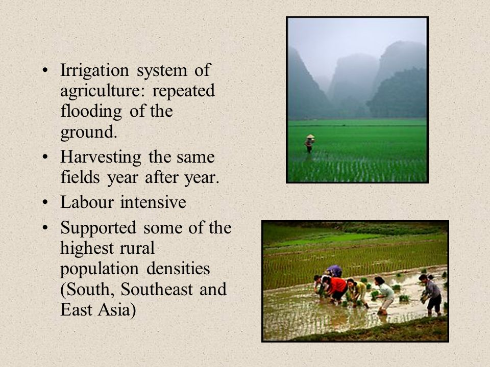 Irrigation system of agriculture: repeated flooding of the ground.