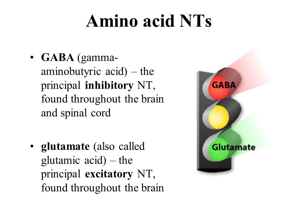 Amino acid NTs GABA (gamma-aminobutyric acid) – the principal inhibitory NT, found throughout the brain and spinal cord.