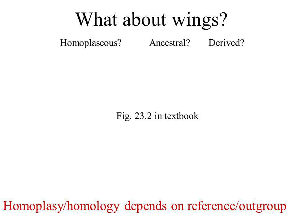 What about wings Homoplasy/homology depends on reference/outgroup