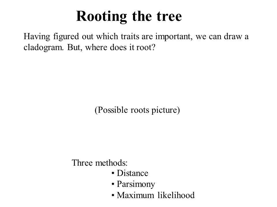 Rooting the tree Having figured out which traits are important, we can draw a. cladogram. But, where does it root