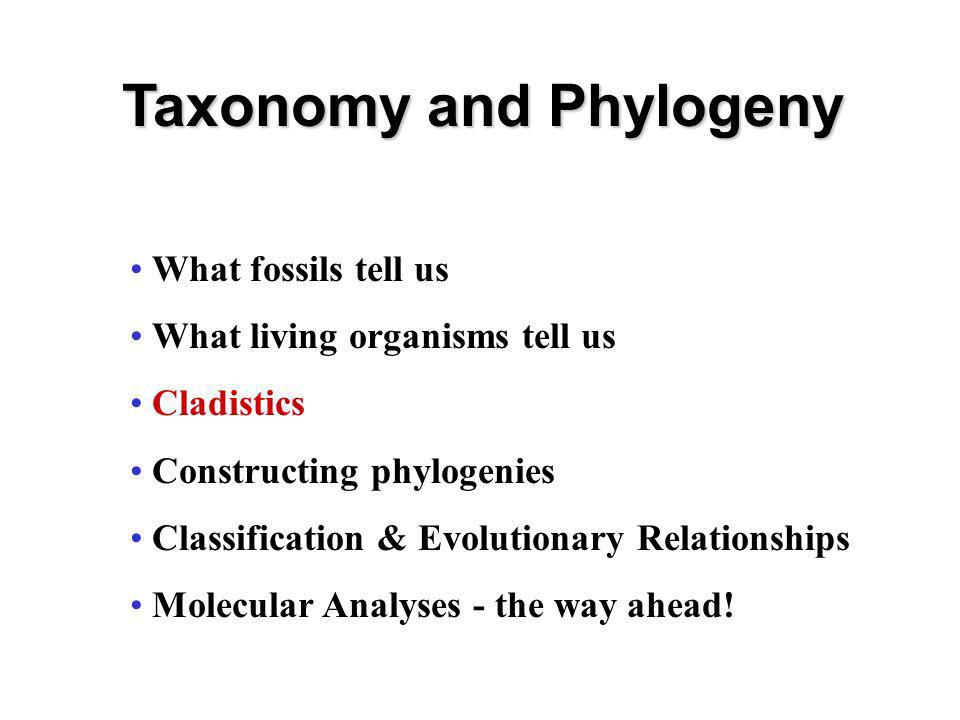 Taxonomy and Phylogeny