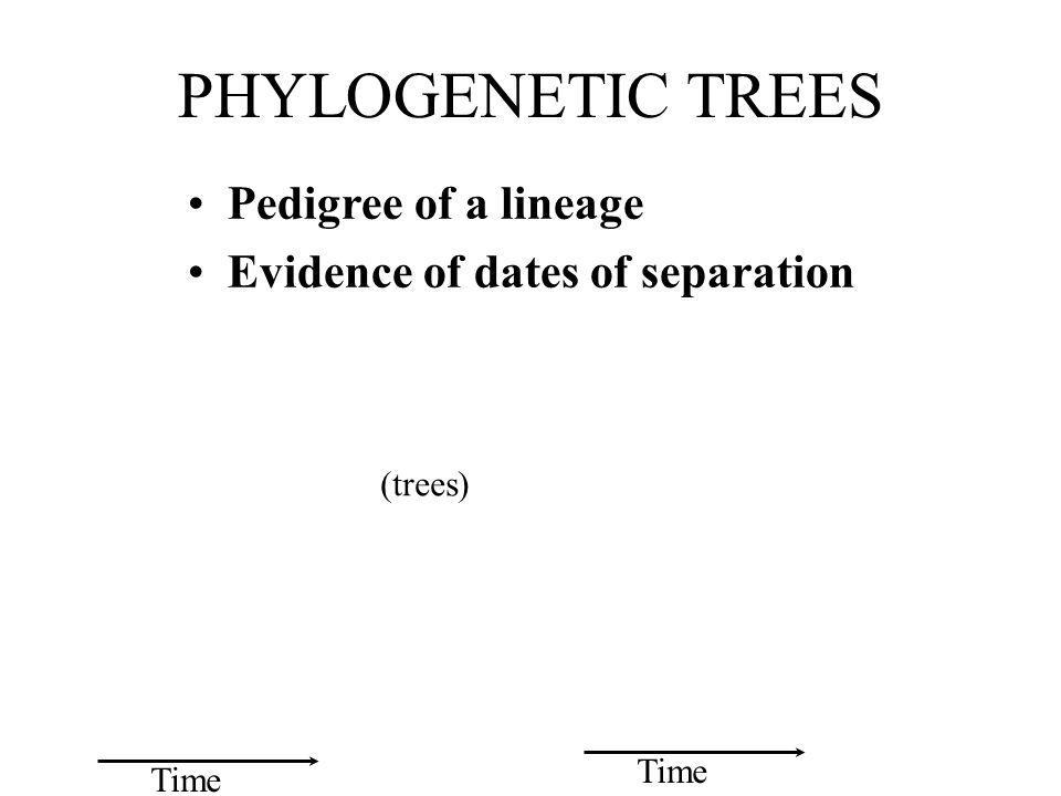 PHYLOGENETIC TREES Pedigree of a lineage