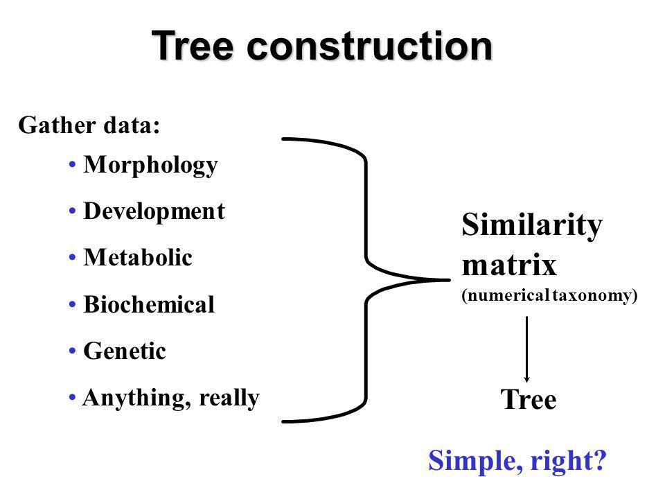 Tree construction Similarity matrix Tree Simple, right Gather data: