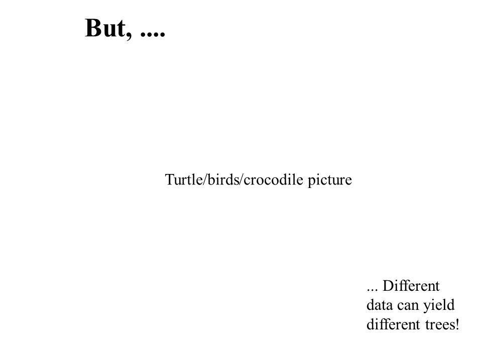 But, .... Turtle/birds/crocodile picture