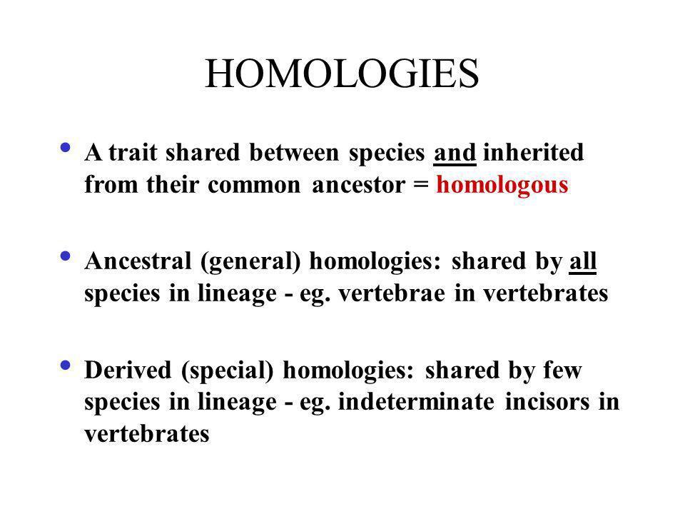 HOMOLOGIES A trait shared between species and inherited from their common ancestor = homologous.
