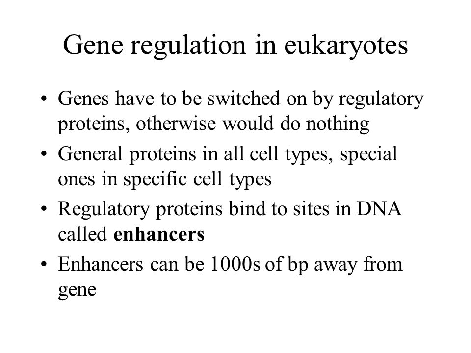 Gene regulation in eukaryotes