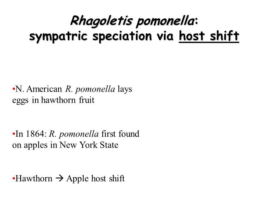 Rhagoletis pomonella: sympatric speciation via host shift