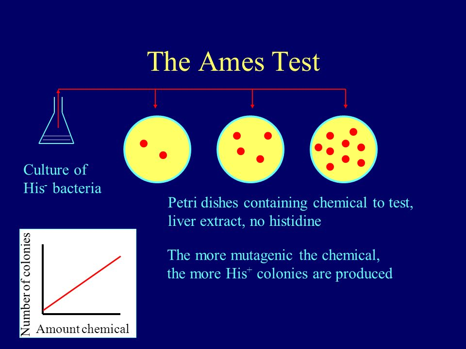 the ames test testing carcinogens using bacteria essay Thus, several more carcinogens could be detected by performing the ames test and the bacterial dna-repair tests in tandem than by using either test alone nevertheless mutagenicity tests/methods substances carcinogens.