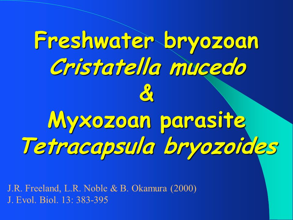 Freshwater bryozoan Cristatella mucedo & Myxozoan parasite Tetracapsula bryozoides
