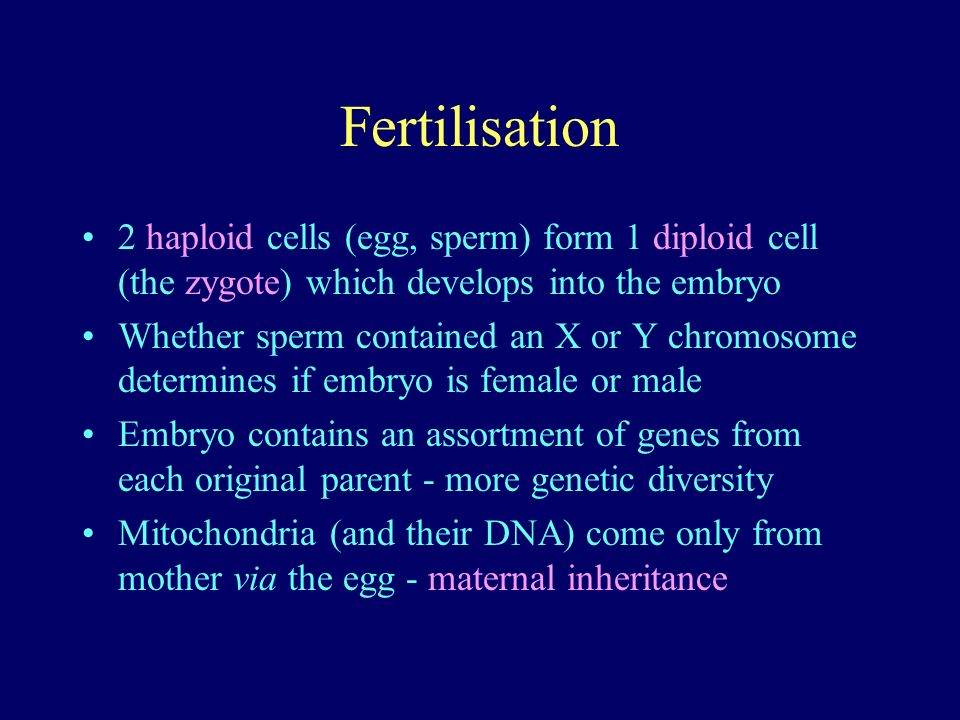 Fertilisation2 haploid cells (egg, sperm) form 1 diploid cell (the zygote) which develops into the embryo.