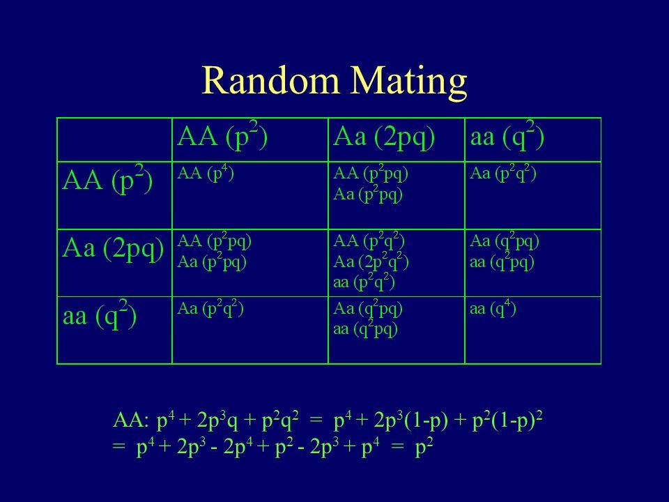 Random Mating AA: p4 + 2p3q + p2q2 = p4 + 2p3(1-p) + p2(1-p)2