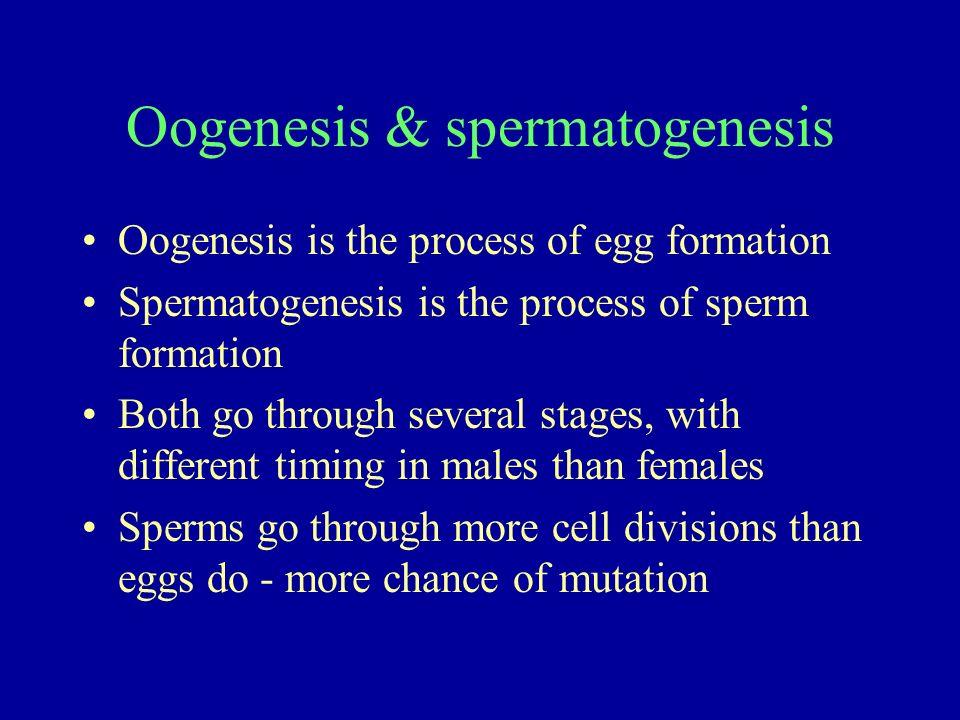 Oogenesis & spermatogenesis