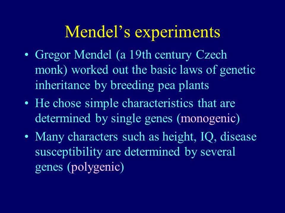 Mendel's experiments Gregor Mendel (a 19th century Czech monk) worked out the basic laws of genetic inheritance by breeding pea plants.