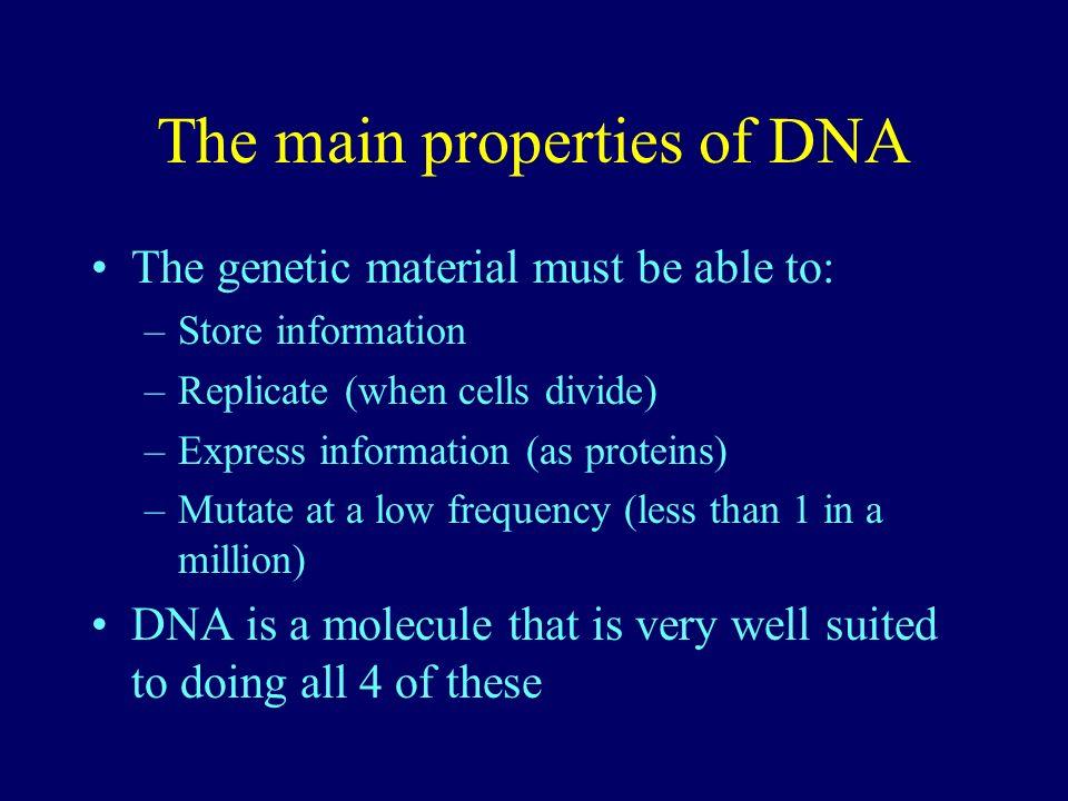 The main properties of DNA