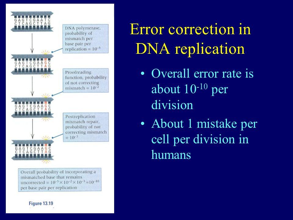Error correction in DNA replication