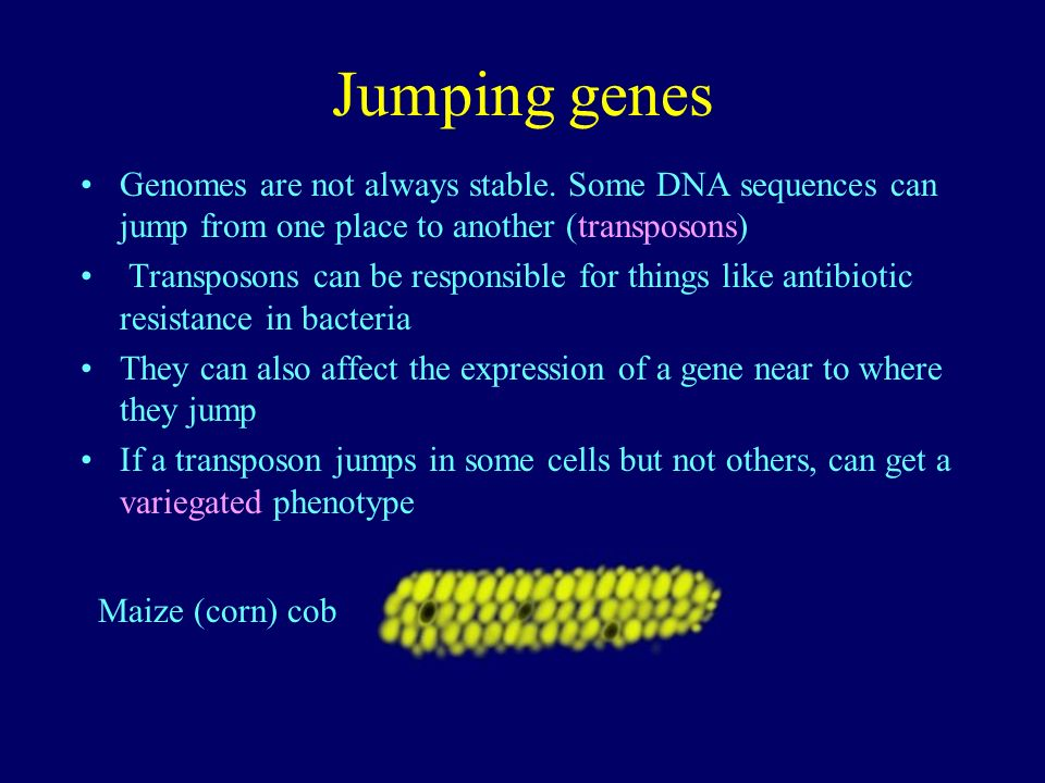 Jumping genes Genomes are not always stable. Some DNA sequences can jump from one place to another (transposons)