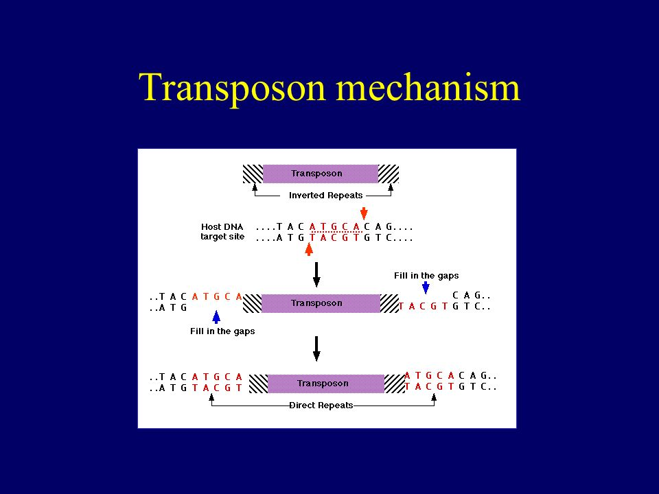 Transposon mechanism