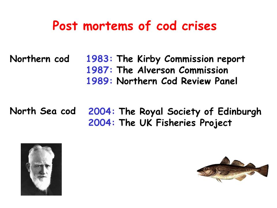Post mortems of cod crises