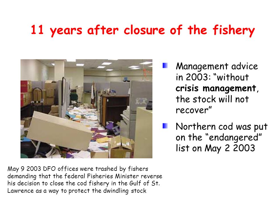11 years after closure of the fishery