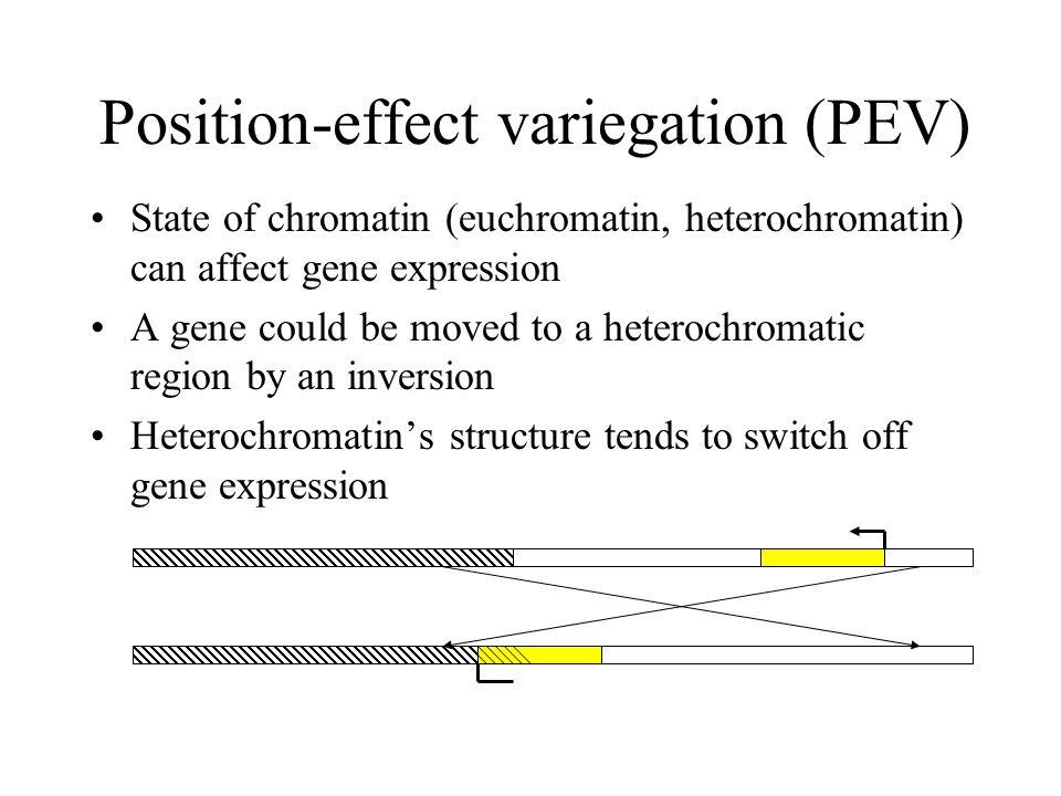 Position-effect variegation (PEV)